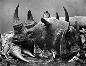 Save a Rhino, Kill a Poacher